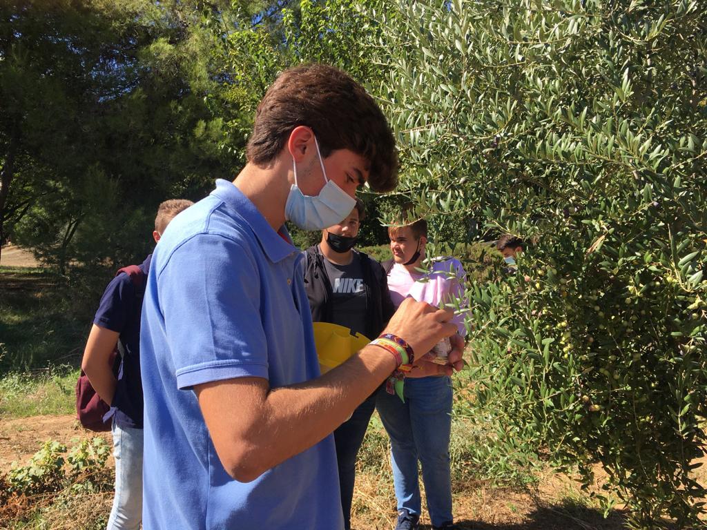 Práctica de trampeo de «Bactrocera oleae» con los alumnos de 1º de Producción Agropecuaria.